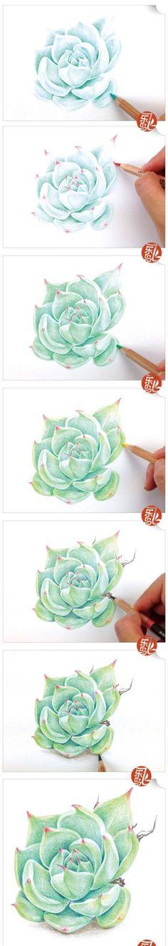 【绘画教程】彩铅 步骤 教程 多肉植物