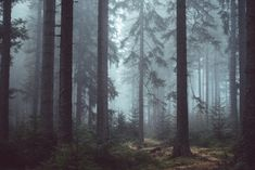 Browse through our collection of forest images and forest pictures. High quality pictures of forest and images of forest. All forest photos are royalty free. Forest Wallpaper, Of Wallpaper, Photo Wallpaper, Tree Tapestry, Wall Tapestry, Photo Tapestry, Tapestry Nature, Mandala Tapestry, Temple Maya