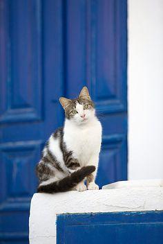 cat greece photo
