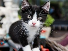 black and white cutie pie