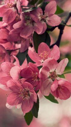 Download Wallpaper 720x1280 Flower, Wood, Shrub, Spring, Bloom Samsung Galaxy S3 HD Background