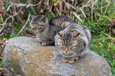 Neko & Cats :: Cats Island AinoShima (相島) Japan by BG  / 500px