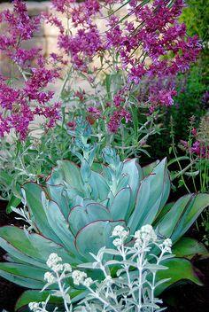 Echeveria subrigida hybrid | Flickr - Photo Sharing!