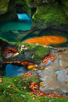 fall leaves in pools in the Mostnica gorge, Slovenia, by Andreas Resch