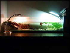 Whoa neat idea. Das gefilterte Aquarium ohne Filter :) - Achtung, Bilder - Aquarium Forum