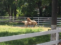 Ranchos los 3 potrillos Gdl Jalisco