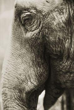 Henry Horenstein. From his series Animalia
