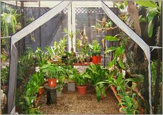 Orchid Shade Solution