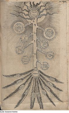 Robert Fludd. Presumably a depiction of the tree of life!