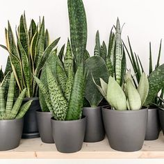 Tamara (@my_green_home_and_me) • Instagram-Fotos und -Videos Learning Environments, Cactus Plants, Indoor Gardening, Create, Instagram, Simple, Nature, Flowers, Beautiful