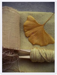 First dyeing with plants experiment // Ginkgo Biloba // First results por Cozy Memories en Flickr...