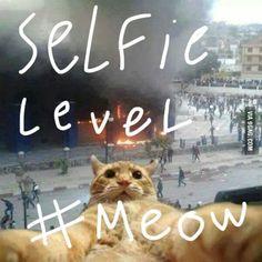 Selfie level: meow...