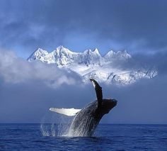 This is so beautiful with the whale in the water and the clouds and the mountain in the background
