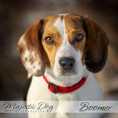 Adopt Mason On Adoptable Dachshund Dog Dachshund Mix And Dachshund Dog