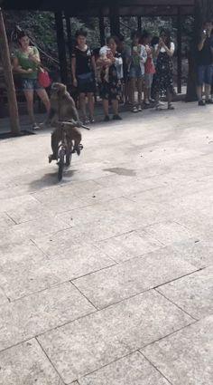 騎車要看路呀!!! – ☆討論區 Forum 歐北貢論壇 – 行動網路電視台