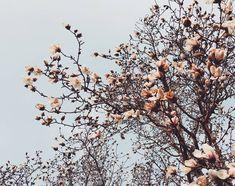 140 Likes, 9 Comments - Alexa Cherry Blossom Season, South Korea, My Eyes, Seasons, Spring, Pretty, Flowers, Plants, Travel