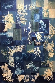 """""""Cyanotype collage using seaweed by Esther Teichmann. Installation created specially for Unseen Photo Fair Gift Baskets For Men, Themed Gift Baskets, Raffle Baskets, Spring Window Display, Photo Fair, Sun Prints, Charity Gifts, Alternative Photography, Bleach Art"""