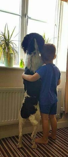 Springer Spaniel & his boy ❤️ by juliet