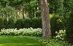 Arborvitae In Landscaping Hydrangea and <b>arborvitae</b> privacy fence bungalow pinterest <b></b>