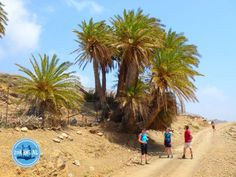 - Zorbas Island apartments in Kokkini Hani, Crete Greece 2020 Crete Greece, Island, Beach, Water, Holiday, Outdoor, Crete Holiday, Tours, Travel Destinations