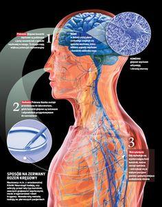 … komórki węchu naprawią rdzeń … | Medycyna naturalna, nasze zdrowie, fizyczność i duchowość