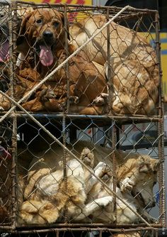 (via Stop the Dog and Cat Consumption in S. Korea on Facebook)