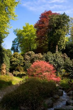 #Bretagne #Finistere #Trevarez  © Paul Kerrien  http://toilapol.net : balade dans le parc le 2 mai ; c'est la fin des camelias alors que 20 % (?) seulement des rhododendrons sont en fleurs