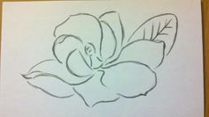 magnolia outline