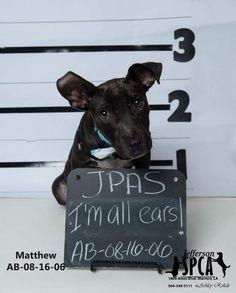 ADOPTED - Matthew - URGENT - Jefferson Parish Animal Shelter: West Bank in Marrero, LA - ADOPT OR FOSTER - Adult Neutered Male Hound Mix