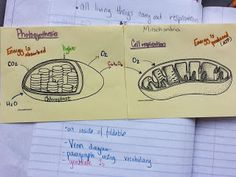 biology ideas Biology Just-in-Time: Compare and contrast photosynthesis and respiration. Biology Classroom, Biology Teacher, Ap Biology, Teaching Biology, Science Biology, Science Education, Life Science, Cell Biology, Teaching Plants