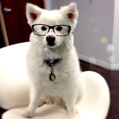 animals wearing glasses | ... and put Ulf's glasses on me … real cute @$$holes. (at Office