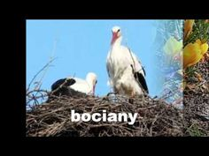 Zwiastuny wiosny - YouTube Maila, Education, Nature, Youtube, Animals, Spring, Jar, Popular, Geography
