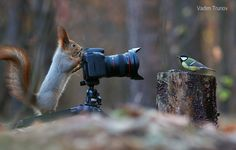 Squirrel, take a picture of me! by Vadim Trunov - Photo 129864645 - 500px
