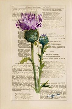 Thistle on Robert Burns poems. would love to use a thistle and have the font running down the side of the stem. Watercolor Flowers, Watercolor Paintings, Watercolours, Robert Burns, Botanical Prints, Foto E Video, Celtic, Drawings, Pictures