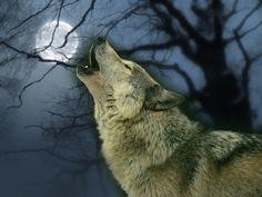 Art ~ Wolves  ~ - wolves Wallpaper animals