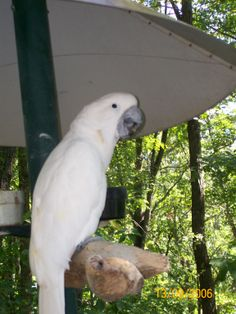 Here is someone who is waiting patiently for your visit!