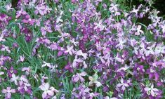 In the night garden: plants with an after-dark perfume