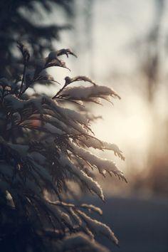 Winter Morn. snow photography.