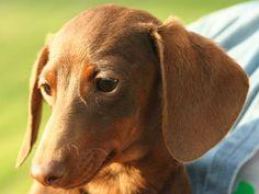 I got: You Should Get A Proud, Intelligent Dog! What Kind Of Dog Should You Own?