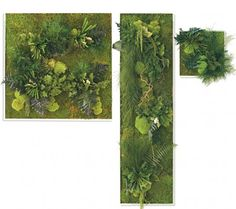 Fern and Moss Wall Art - VivaTerra Thinking about doing something like this up my big wall....