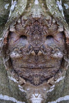 Dream Creatures: Reflected Images of Tree Bark Reveal the Faces Hiding in the Forest How To Make Trees, Weird Trees, Forest Sunset, Tree Plan, Tree People, Tree Faces, Unique Trees, Tree Sculpture, Sculptures