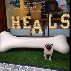 A dog's dream. Henry the Pug wishes he could have the Os Hen bench by Tog at Heal's. Photo by @Henry_Pug
