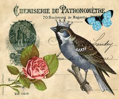 Come and Check out the New Free Graphic of the Day! A beautiful collage featuring a crowned bird.vintage journal paper, a butterfly and more! Images Vintage, Vintage Birds, Vintage Pictures, Vintage Postcards, Vintage Prints, Vintage Graphic, Magenta, Funny Bird, Beautiful Collage