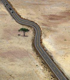 Save Every Tree as if its the last tree (Jeski Social Campaign)