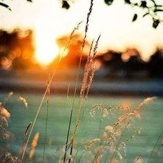 """""""Reclamar é sempre uma não-aceitação do que é. Inevitavelmente carrega uma carga inconsciente negativa. Quando você reclama, você se coloca no papel de vítima. Quando você reclama, você está sendo ingrato. Então mude a situação e tome alguma atitude, ou deixe a situação ou aceite-a. Reclame menos. Agradeça e ame mais."""" - Via @fluireflorescer"""