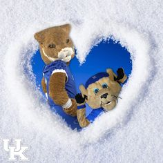 UK University Of Kentucky Football, Kentucky College Basketball, University Of Ky, Uk Basketball, Uk Football, Kentucky Wildcats, Go Big Blue, Blue And White, Uk Photos