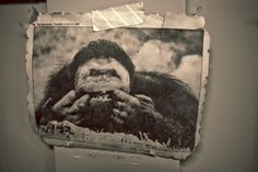 #365project - 006 Smiling King Kong http://www.veedophotography.com/project-365-006/