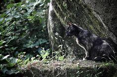 The Moorish Cat