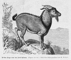 Alcide Raillet: Traité de zoologie médicale et agricole. Paris 1895.