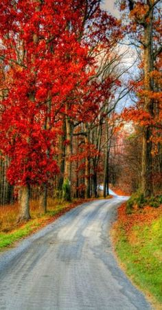 Autumn's Country Road (by ☩ D L Ennis) Autumn on a country road in Bedford County, Virginia… Virginia, Country Roads, Fall, Autumn